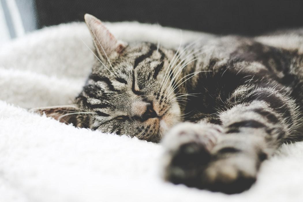 gemütlich schlafen